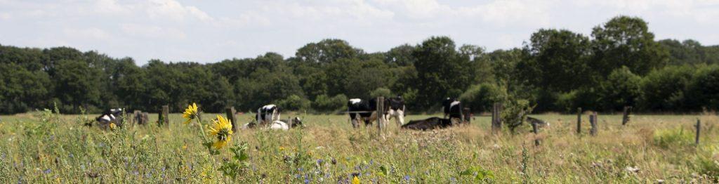 BoerenNatuur | natuurinclusieve landbouw | bloeiende akkerrand