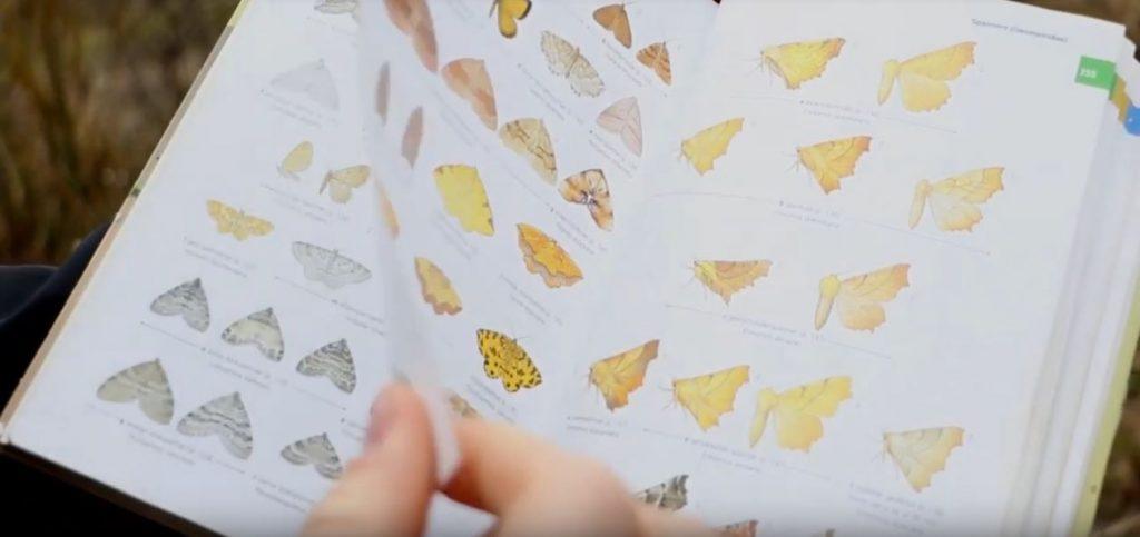 BIMAG | Boerennatuur | vlinderstichting | LTO | LNV