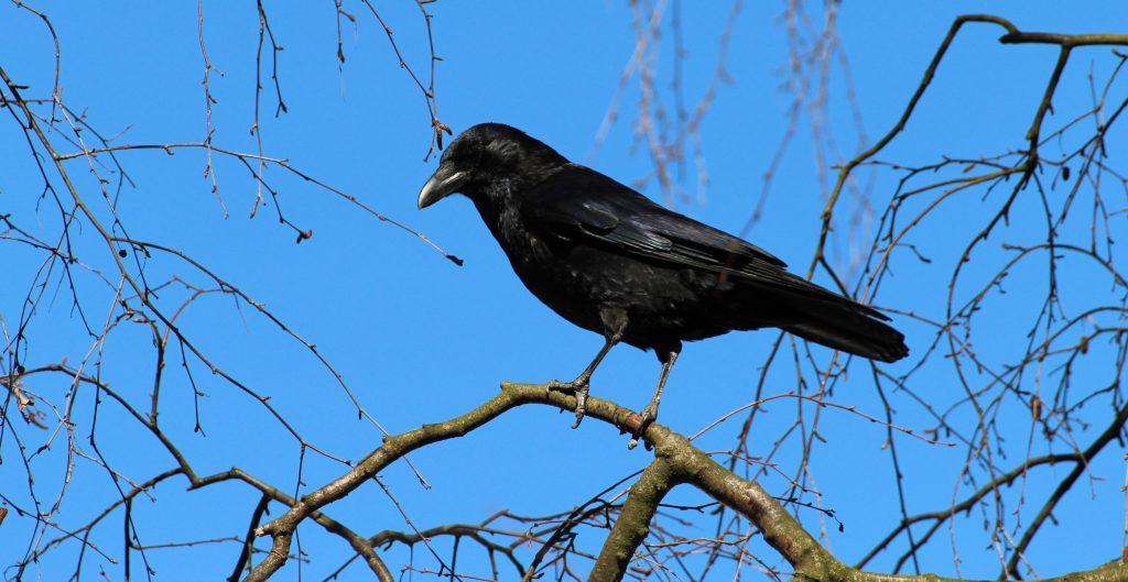 BoerenNatuur | natuurinclusieve landbouw | weidevogel